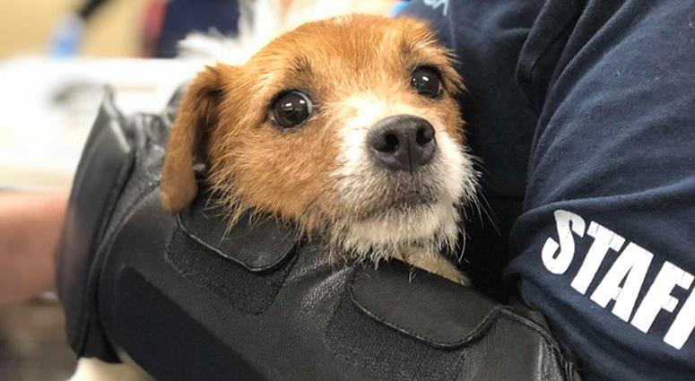 New Jersey Dogs Rescued