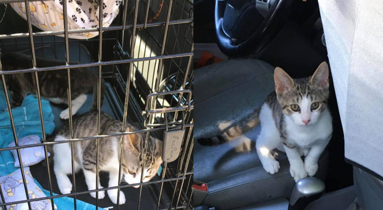 Kittens Rescued From Hot car