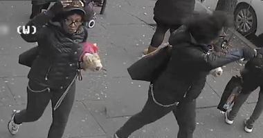 Bus dog slash