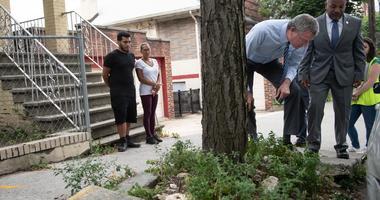 Mayor Tree Damage