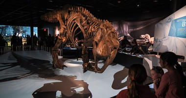 NYC's Museum Of Natural History
