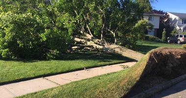 Tree down in Commack