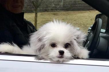 Causi Dog