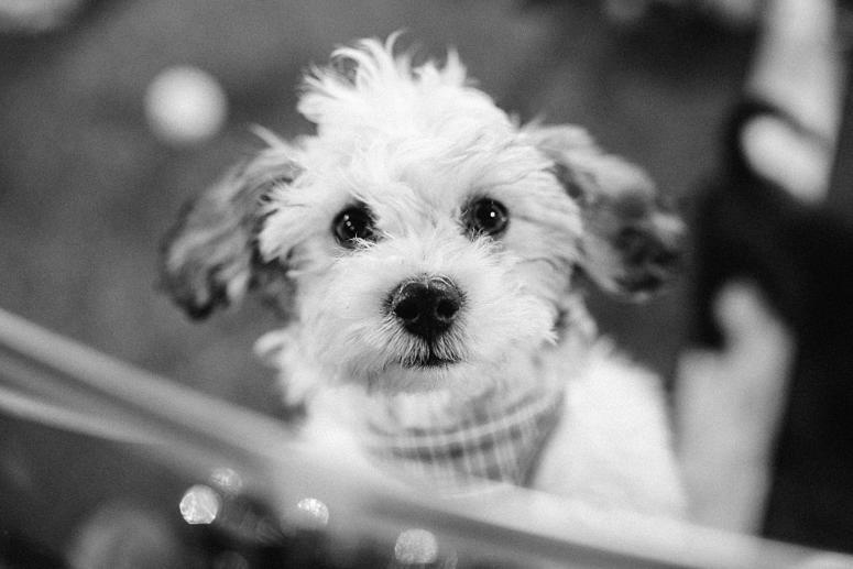 Adoptable puppy