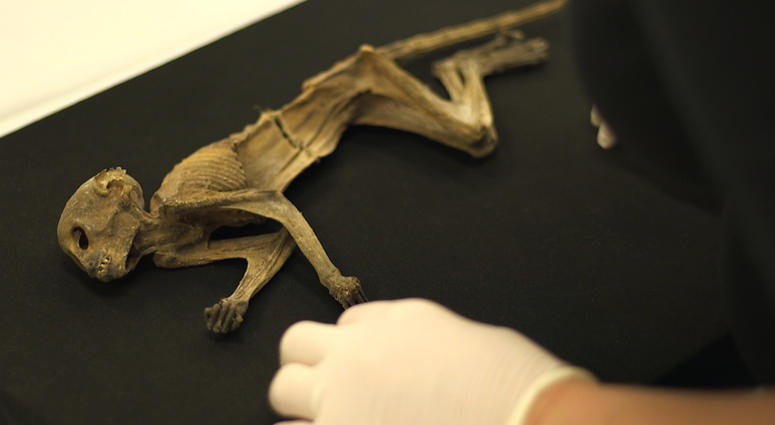 Dayton's Monkey at Science Museum