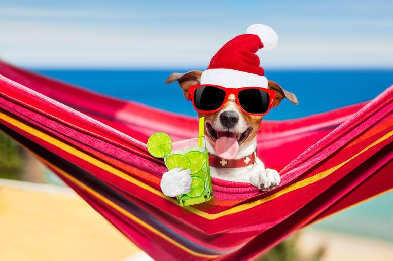 dog on hammock on summer christmas holidays
