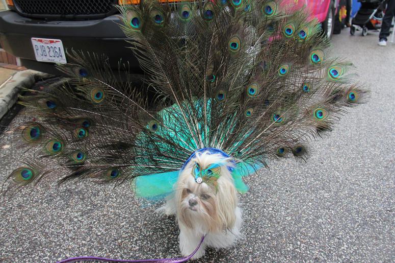 Pet Halloween Costume Ideas