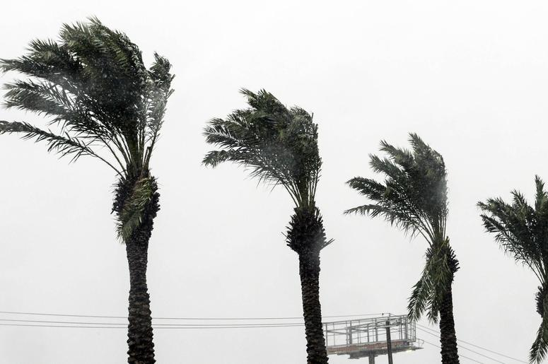 Palm fronds bend in the wind as Hurricane Michael approaches.