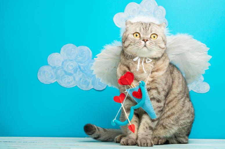 cat cupid