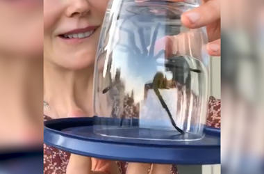 Nicole Kidman Rescues Tarantula From Pool, Saves Sunday Funday for the Kids
