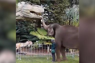 Watch Elephants Greet Animatronic Dinosaurs At Zoo