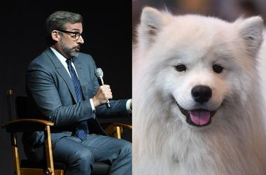 Steve Carrell and Samoyed dog