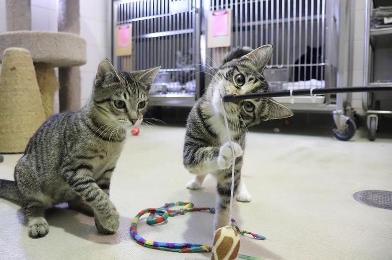 Kittens Vegas and Oryan