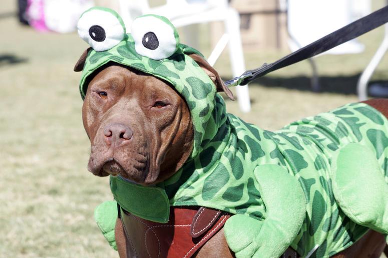 dressed up dog