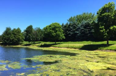 An algae bloom in a Montgomery County lake has been proven deadly for dogs.