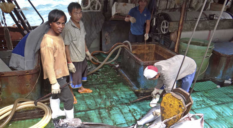 Fishermen in the Marshall Islands unload tuna for Luen Thai Fishing Venture, a company that was supplying fish that entered the supply chain of Sea To Table. Men work around the clock, getting little pay.