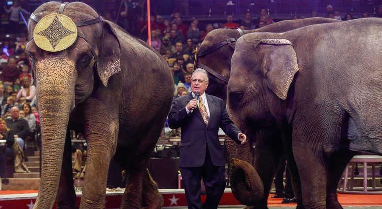 Circus animal elephant
