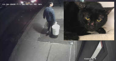 Cats in buckets