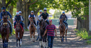 Jun 5, 2018; Elmont, NY, USA; Gronkowski walks to the main track before he trains in preparation for the 150th running of the Belmont Stakes at Belmont Park.