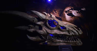 Dragon skulls can be seen on display at the Game Of Thrones: The Touring Exhibition