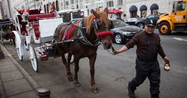 A horse drawn carriage operator walks his horse along the side of the road while waiting to take tourists on tours through Central Park on March 11, 2014 in New York City. New York City Mayor Bill De Blasio has proposed a ban on the carriages, though oppo