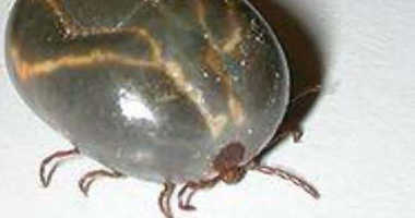 The exotic longhorned tick has been found in Bergen County.