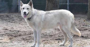 Nakita The Wolf