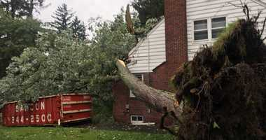 A microburst took down trees in Summit, New Jersey.