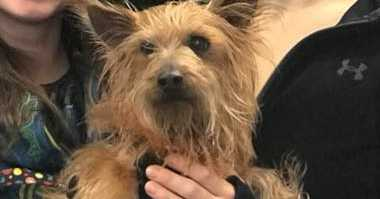Buddha the Yorkie was found in Virgina over a year after being stolen from a Virginia man.