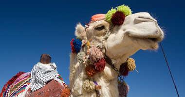Camel file image