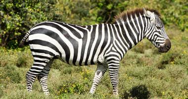 Zebra file image