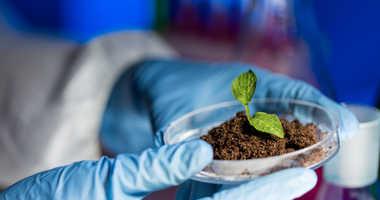 Scientist plants a tree