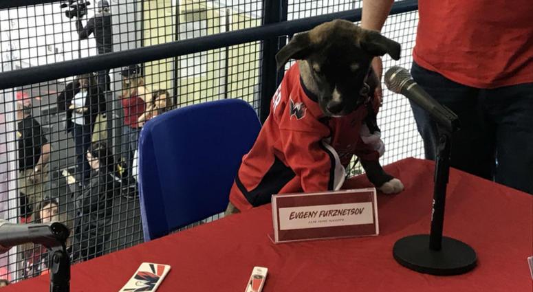 #CapsCanines Puppy Playoffs