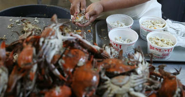 Crab season begins: Is it fun to pick crabs?
