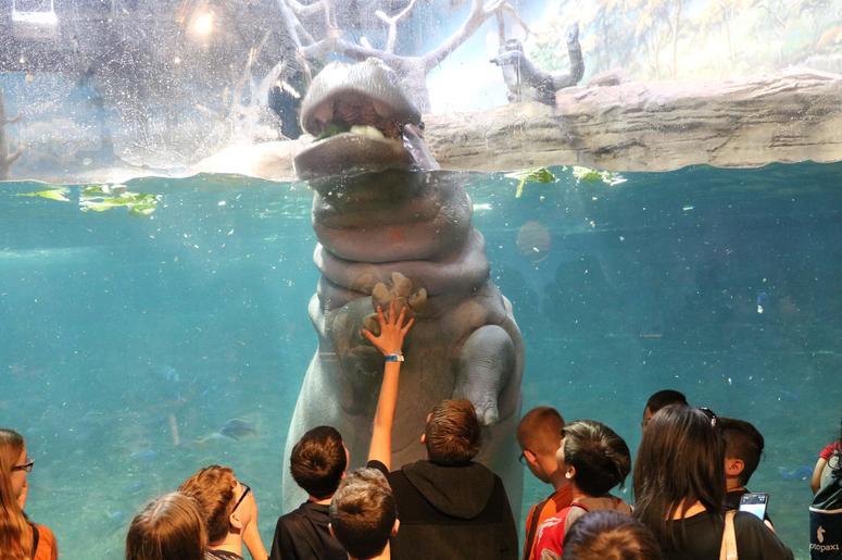 Teachers Get Free Admission To Miami Seaquarium In October