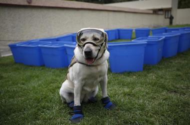 Frida, uno de los tres perros de la Marina entrenados para buscar a personas en edificios colapsados, con su equipo protector durante una conferencia de prensa en la Ciudad de México.