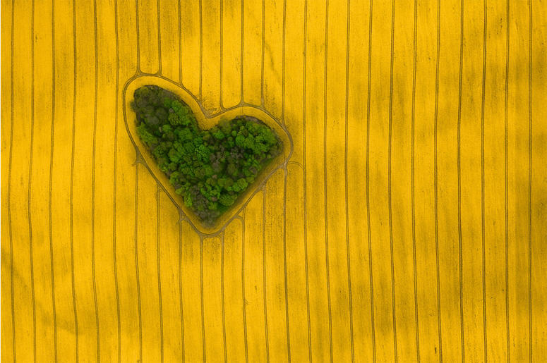 Among millions of hectares of fields there is one that stands out in a special way. The blooming oilseed rape in the shape of a heart in this picturesque environment paints harmoniously the concept of love for nature.