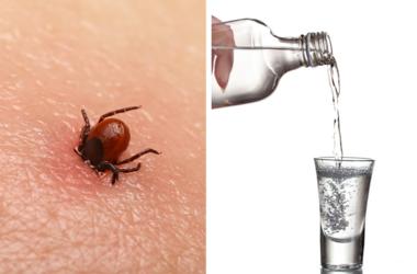 Encephalitis tick / Vodka poured into a glass