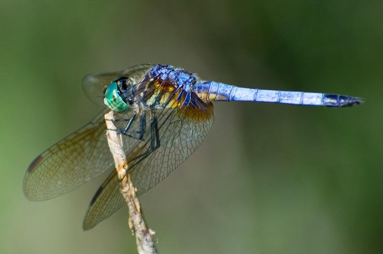 Dragonfly nature reserve