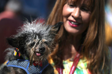 Scamp the Tramp, the world's ugliest dog