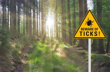 tick sign in woods