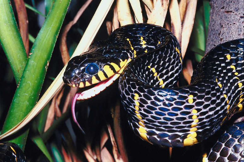 Venomous Snake Goes Missing At The Bronx Zoo | New York's Country 94 7