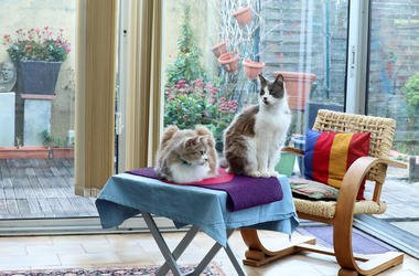 cats at home