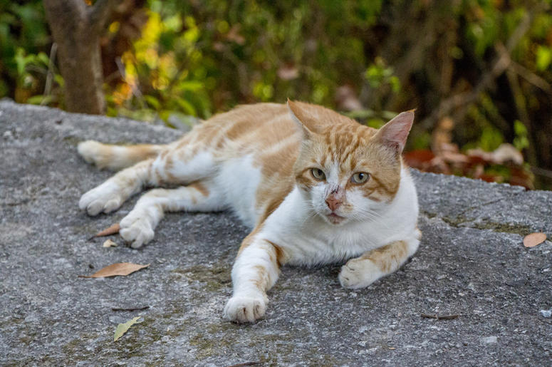 Cat Returns Home Two Days After Owners Bury Its 'Remains