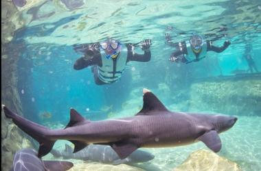 Discovery Cove Shark