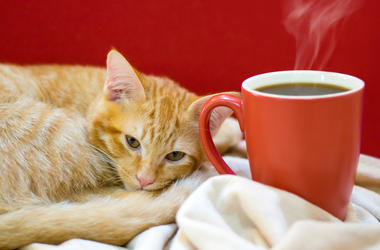 Cat cafe, a cat with a cup of coffee