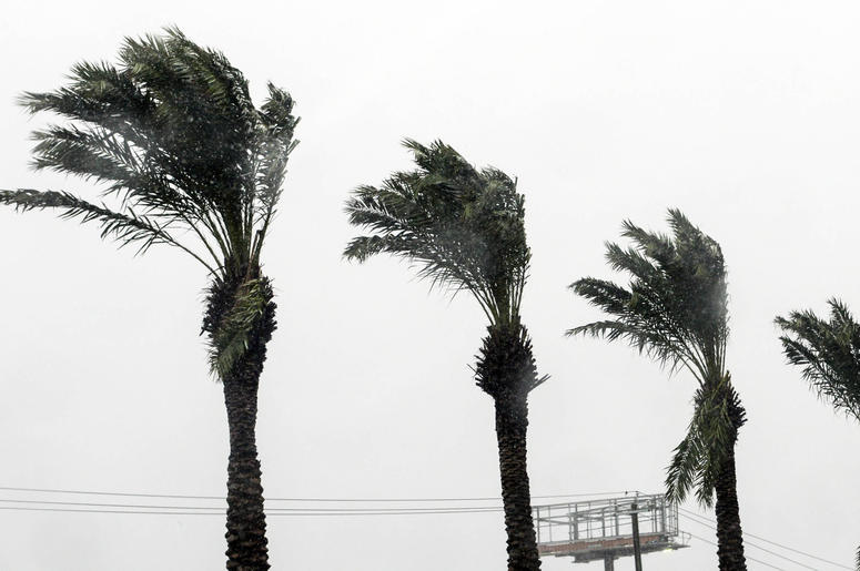 Oct 10, 2018; Panama City, FL, USA; Palm fronds bend in the wind as Hurricane Michael approaches. Mandatory Credit: Craig Bailey/FLORIDA TODAY via USA TODAY NETWORK