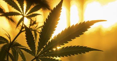 marijuana-dreamstime_s_53552919.jpg