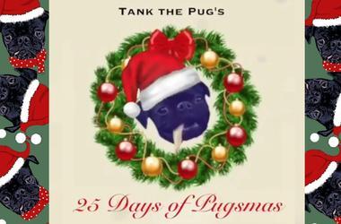 Tank the Pug's 25 Days of Pugsmas