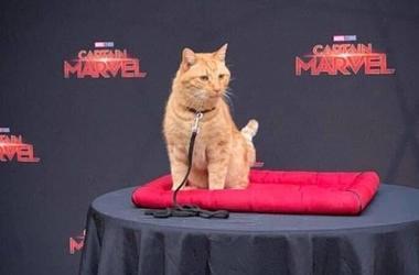 Reggie the cat plays Goose in Captain Marvel